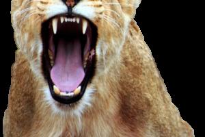 1-roar.png
